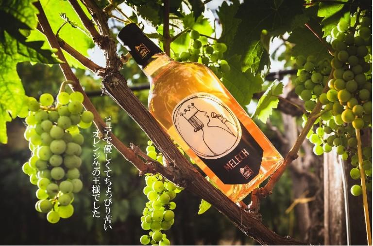 Read more about the article 【日本に上陸したばかり】ピュアで優しくてちょっぴり苦いオレンジワイン~カンティーナジアラ