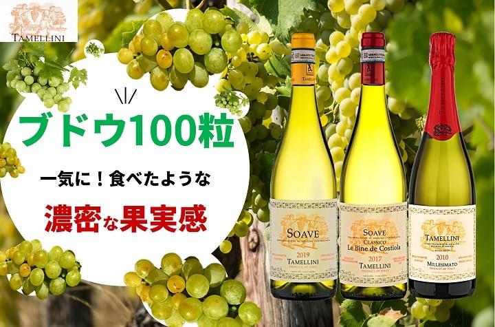 Read more about the article あなたのマイベスト白ワインを更新させる可能性があります~タメリーニ