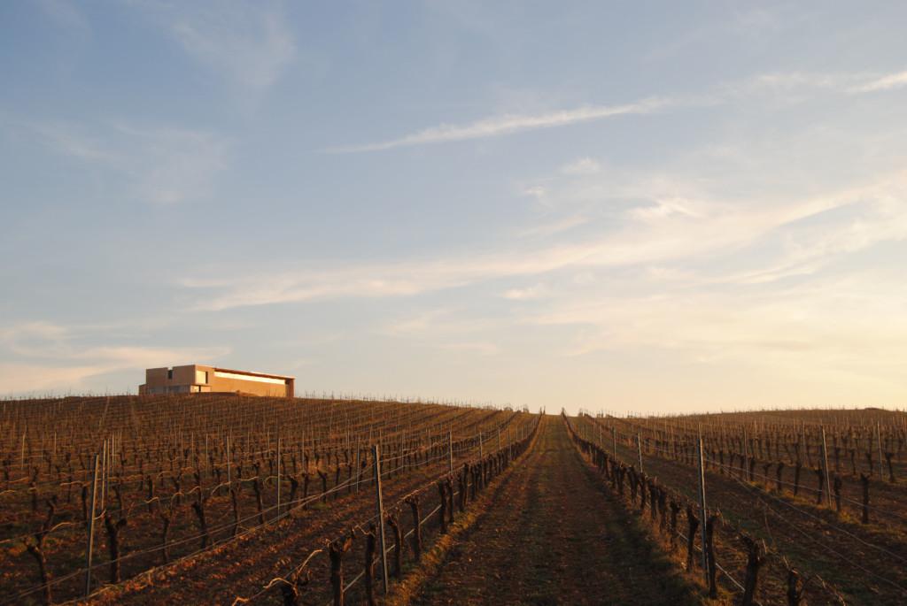 Isaac Cantalapiedra Viticultor 畑